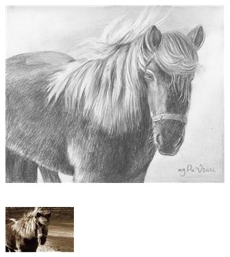 Pencil Drawing of a Horse 1