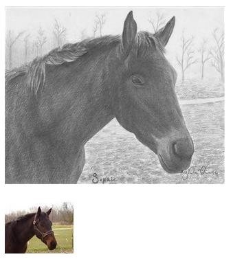 Pencil Drawing of a Horse 2