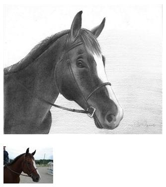 Pencil Drawing of a Horse 3