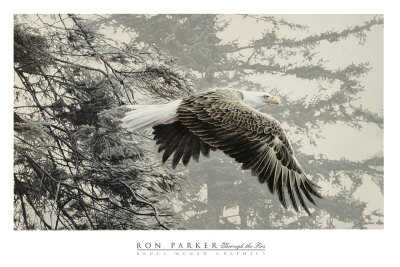 Bald Eagle Drawings - Buy at Art.com