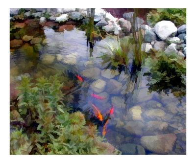 Koi fish drawings tips on how to draw koi fishes for Koi fish pond drawing
