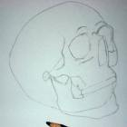 Pencil drawing of a skull - Sketch 4