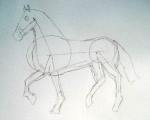 A horse sketch 3
