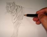Toning a tiger pencil drawing