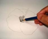 Hawaiian flower sketch 4