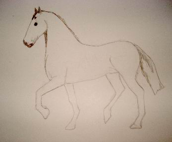 Toning in pencil drawing of a horse
