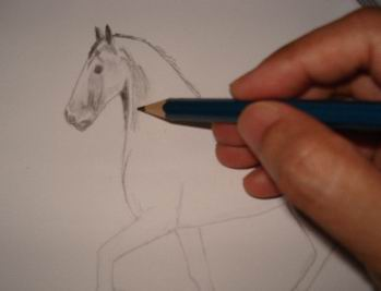 Toning in pencil drawing of a horse 1