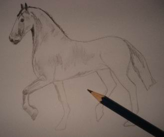 Toning in pencil drawing of a horse 2