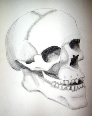 Pencil drawing of human skull.
