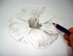 Hawaiian flower sketch 10