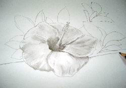 Pencil Hawaiian flower sketch 12