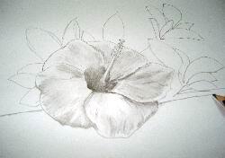 Pencil Hawaiian flower sketch 12