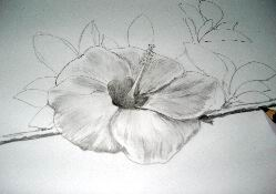 Hawaiian flower sketch 13