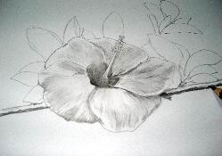 Hawaiian flower sketch 13