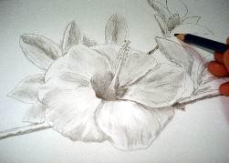 Hawaiian flower sketch 15