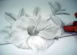Hawaiian flower sketch 16