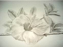 Hawaiian flower pencil drawing