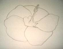 Hawaiian flower sketch 2