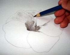 Hawaiian flower sketch 6