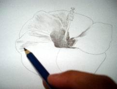 Pencil Hawaiian flower sketch 7