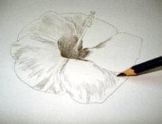 Hawaiian flower sketch 9