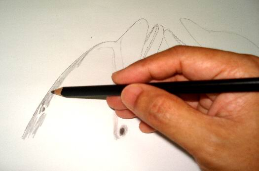 Apply a 4B pencil to your dolphin drawing