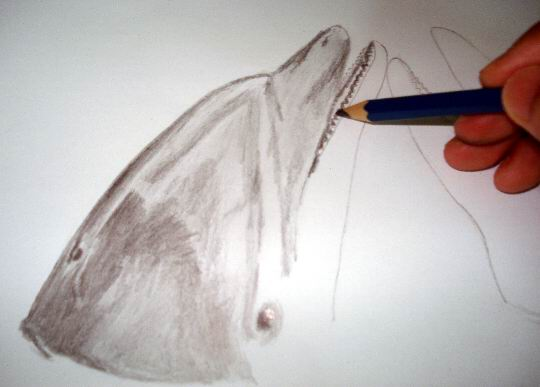 Apply a 4B dark tones to your dolphin drawing