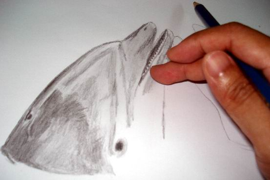 Smudge your dolphin drawing