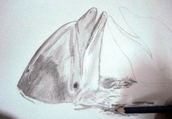 Add water to your dolphin drawing