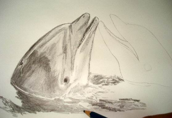 Continue to pour water to your dolphin drawing