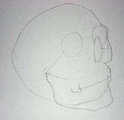 Pencil drawing of a skull - Sketch 3