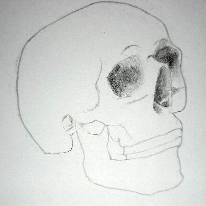 Pencil drawing of a skull - Sketch 6