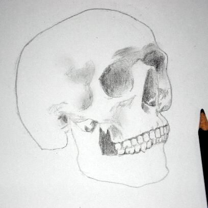 Pencil drawing of a skull - Sketch 7