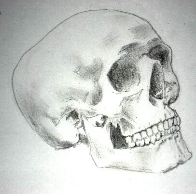 Pencil drawing of a skull - Sketch 8