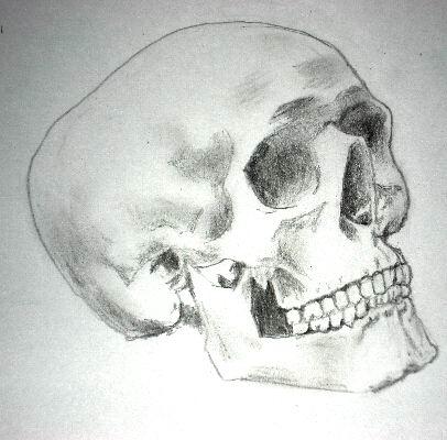 Pencil drawing of a skull - Sketch 8