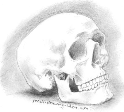 Pencil drawing of a skull