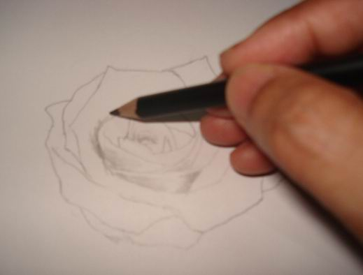 Rose pencil drawings - Sketch 2