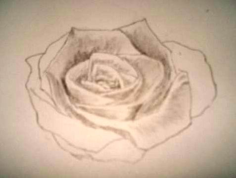 Rose pencil drawings - Sketch 3