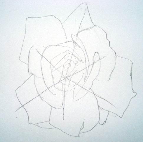 Rose sketch 1