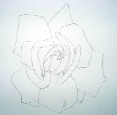 Rose sketch 2