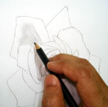 Rose sketch toning