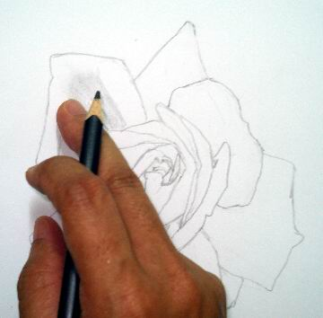 Rose sketch hand rubbing