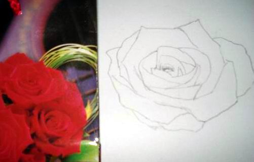 Rose Pencil Drawings - Sketch 1