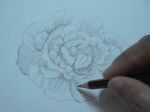 Toning a rose pencil drawing
