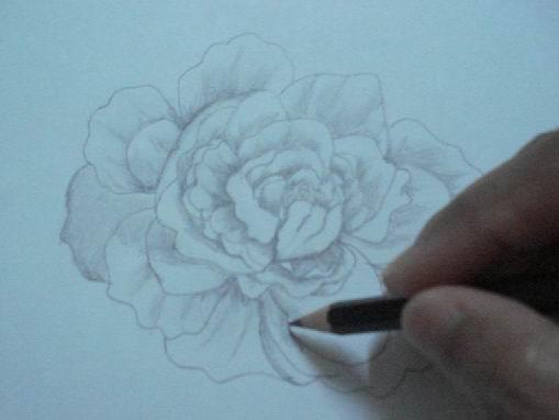 Toning a rose pencil drawing