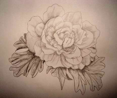 A rose pencil drawing