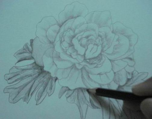 A hand drawn rose