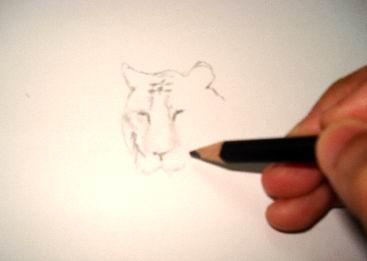 A tiger sketch