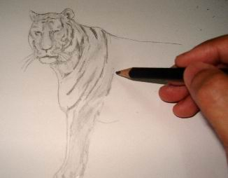 Toning a tiger pencil drawing